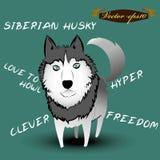 Info graphic illustration design vector of siberian husky dog Stock Images