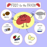 Info graphics Proper nutrition for the brain Royalty Free Stock Images