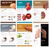 infographic内部人体器官的图解表 传染媒介小册子模板 免版税库存照片