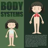 infographic女孩和身体的系统 向量例证