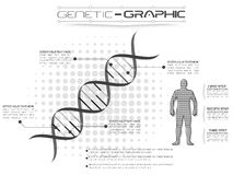 Infographic γενετικό Στοκ φωτογραφία με δικαίωμα ελεύθερης χρήσης