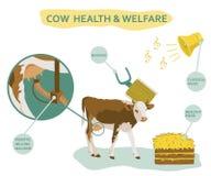 Infographic της ευημερίας αγελάδων συμπεριλαμβανομένης της χρήσης των επικεφαλής, υγιών τροφίμων μασάζ, της κλασικής μουσικής κ.λ διανυσματική απεικόνιση