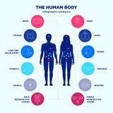 Infographic beståndsdelar för människokropp, man- och kvinnligkonturer och linje symbolsuppsättning, vektorlägenhetdesign för inr royaltyfri illustrationer