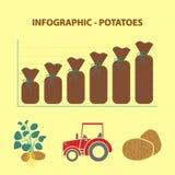 Infographic con il grafico di crescita di produzione delle patate Immagini Stock