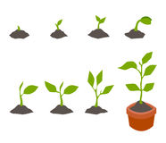 Infographic de planter l'arbre Photos stock