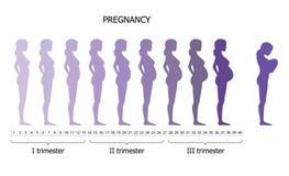 Infographic della donna incinta nel periodo differente Immagini Stock Libere da Diritti