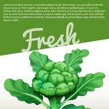 Infographic design with fresh broccoli. Illustration Stock Image
