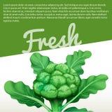 Infographic design with fresh broccoli Stock Image
