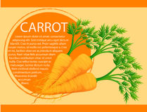 Infographic design with fresh carrots Stock Photos