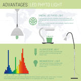 Infographic elements LED lamp Royalty Free Stock Images