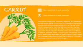 Infographic with fresh carrots Royalty Free Stock Photo