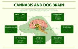 Infographic horizontal de cerveau de cannabis et de chien illustration libre de droits