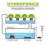 Infographic Hydroponic Illustration Stock Image