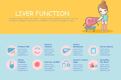 Infographic of liver. Function, great for health care concept Royalty Free Stock Photos