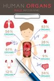 Infographic Male Human Organ set, Doctor writing paper chart with pad. Concept idea illustration isolated, with copy space Stock Image