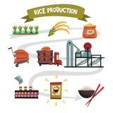 Infographic mall av risproduktion från odling till färdig produktodling, uttorkning, plockning vektor illustrationer