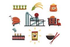 Infographic mall av risproduktion från odling till färdig produktodling, uttorkning, plockning stock illustrationer