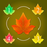 Infographic from maple leaves. Infographic layout for seasonal theme in the form of autumn maple leaf marked numbers and series-connected white arrows Stock Photography