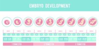 Infographic met stadia van zwangerschap en embryo, foetusontwikkeling royalty-vrije illustratie