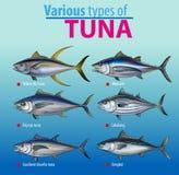 Infographic olik typ av tonfisk
