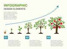 Infographic of planting tree. Seeds sprout in ground. Presentation template with the evolution of a tree. Vector illustration. Isolated on white background Royalty Free Stock Images