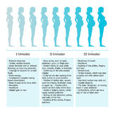 Infographic of pregnant woman in different period Royalty Free Stock Photo
