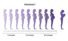 Infographic of pregnant woman in different period Royalty Free Stock Images