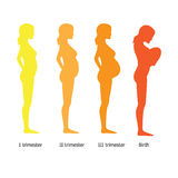 Infographic of pregnant woman in different period Stock Image