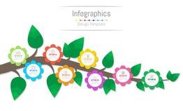Infographic projekta elementy dla twój biznesowych dane z opcjami, części, kroki, linie czasu, procesy, kwiaty lub gałąź 8, ilustracja wektor