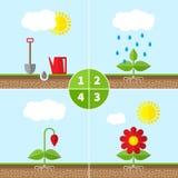 Infographic quattro fasi di crescita di pianta Fotografia Stock