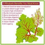 0716_36 infographic for. 9 Rhubarb benefits you must know. Infographic for rhubarb benefits .Vector illustration Stock Photo