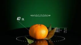 Infographic Tangerine z witaminami, mikroelement kopaliny Energia, kaloria i składnik, ilustracja wektor