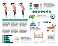 Infographics беременной женщины также вектор иллюстрации притяжки corel иллюстрация вектора