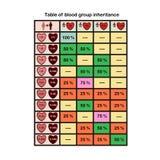 Infographics на унаследовании групп крови Стоковая Фотография