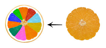 Infographics. GMO oranges on a white background Stock Photo