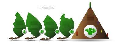 Infographics av myror Fotografering för Bildbyråer