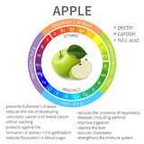 Infographics about the beneficial properties and nutrients in apple. Protein, fats, carbohydrates, vitamins and minerals. Delicious fruit in a realistic style Royalty Free Stock Photos