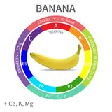 Infographics about the beneficial properties and nutrients in banana, protein, fats, carbohydrates, vitamins and minerals. Delicious fruit in a realistic style Royalty Free Stock Photos