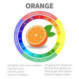 Infographics about the beneficial properties and nutrients in orange. Protein fats carbohydrates vitamins and minerals. Delicious fruit in a realistic style Royalty Free Stock Photo