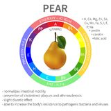 Infographics about the beneficial properties and nutrients in pear, protein, fats, carbohydrates, vitamins and minerals delicioso Imagen de archivo libre de regalías