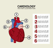 Infographics of cardiology design Stock Image