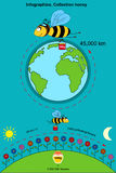 Infographics. Collection honey Royalty Free Stock Photo
