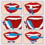 Infographics correcto del vector del cepillado de diente stock de ilustración