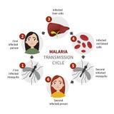 Malaria infographic vector illustration