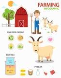 Infographics de ferme de chèvre, illustration illustration de vecteur