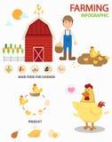 Infographics de ferme de poulet, illustration illustration de vecteur