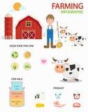 Infographics de ferme de vache, illustration illustration stock