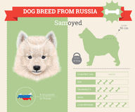 Infographics de la raza del perro del samoyedo Imagen de archivo libre de regalías