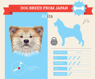 Infographics de race d'Akita Inu Dog Photos libres de droits