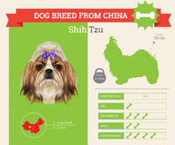 Infographics de race de Shih Tzu Dog Images stock